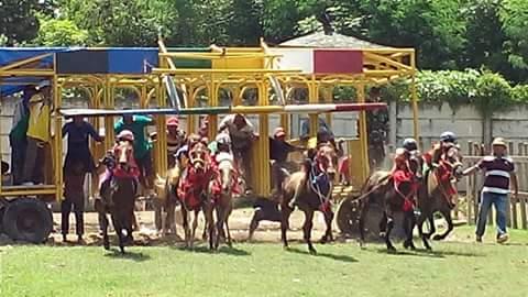 Kuda pacuan saat beradu kecepatan ketika awal lintasan