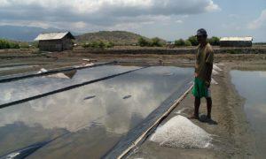 Faktor cuaca pengaruhi produksi garam rakyat di Woha.